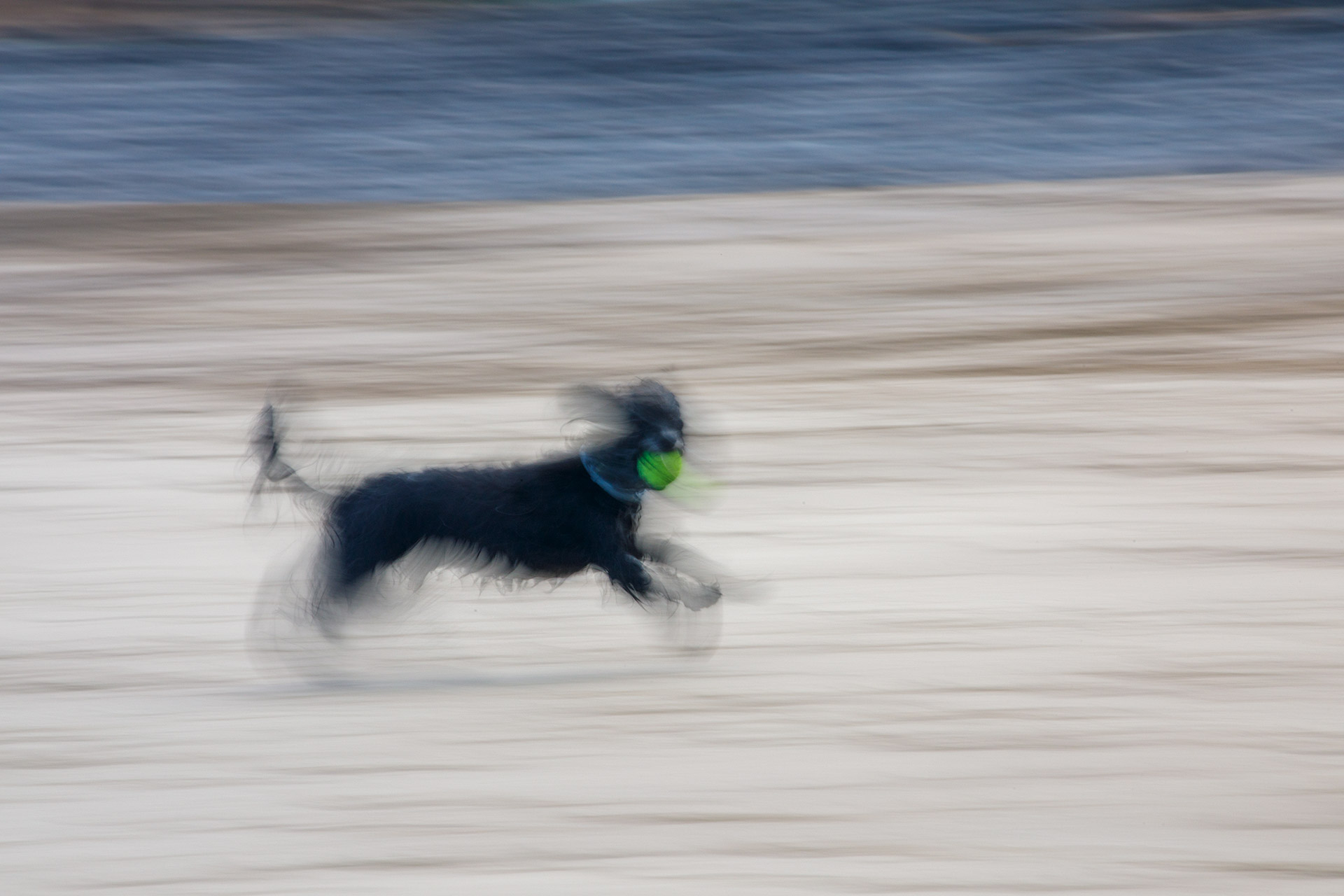 Dog running on La Garita beach Arrieta