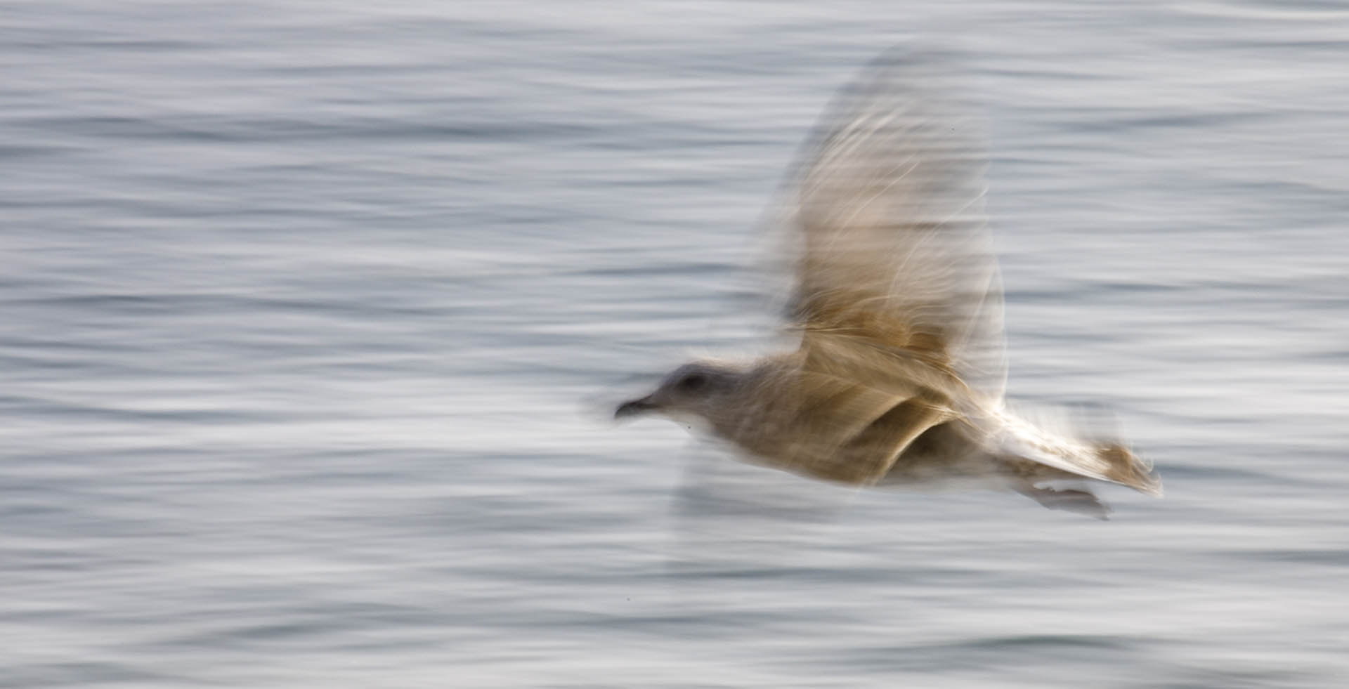 Close-up of flying gull