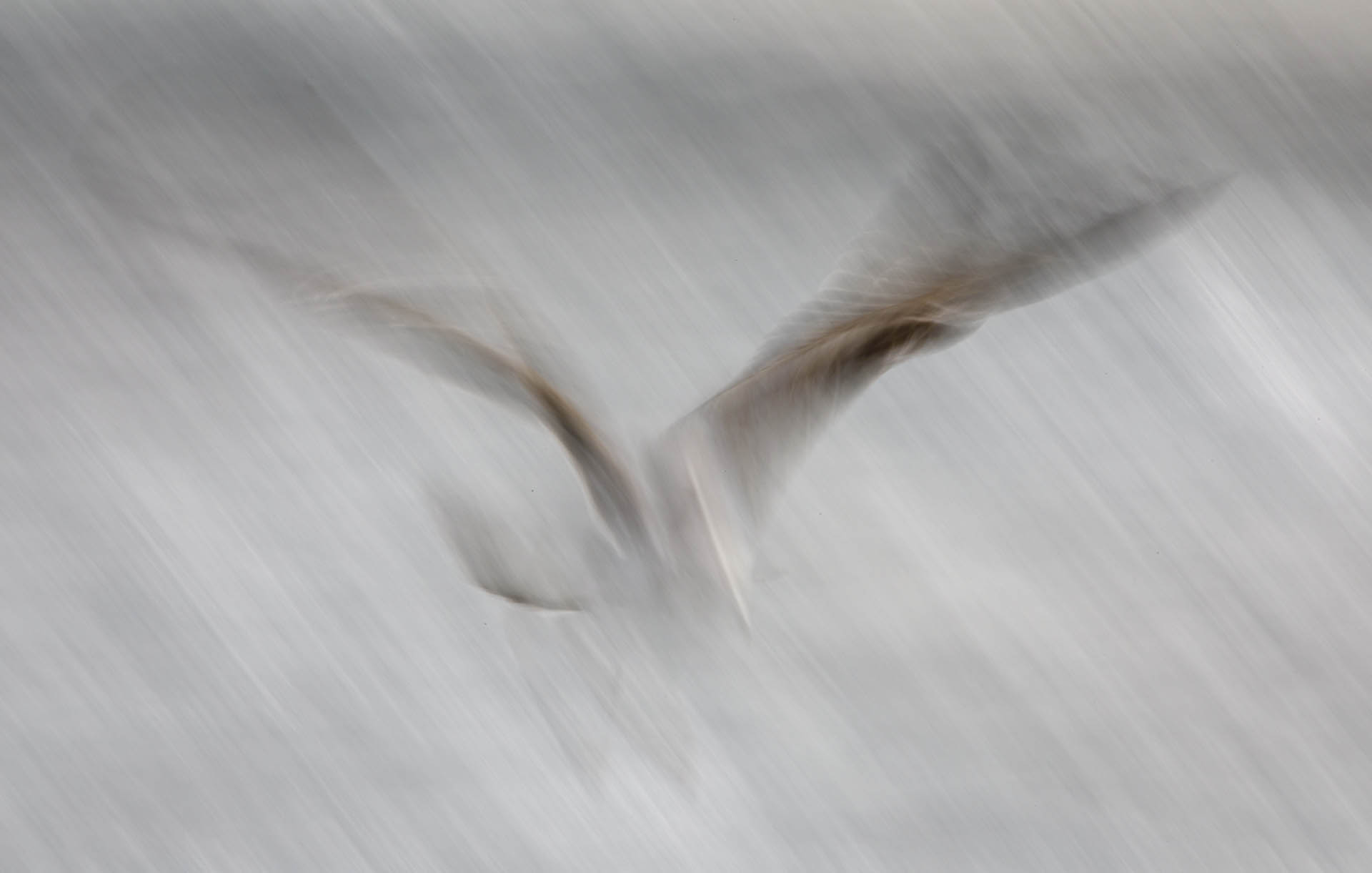 A gull diving headfirst into the water