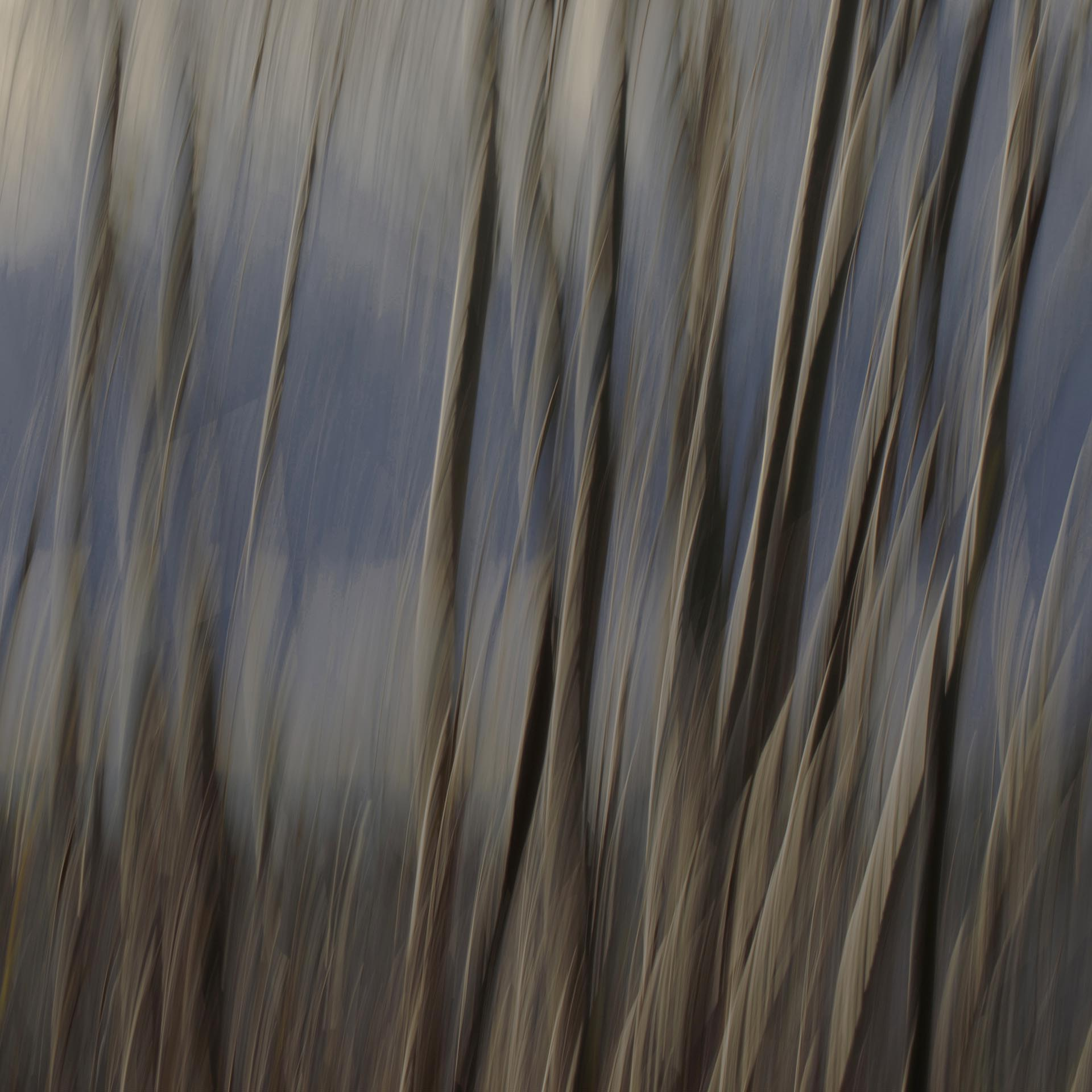 Branches of a willow against a dark background
